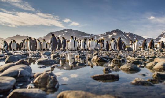 Eine Pinguinkolonie aus nächster Nähe bestaunen