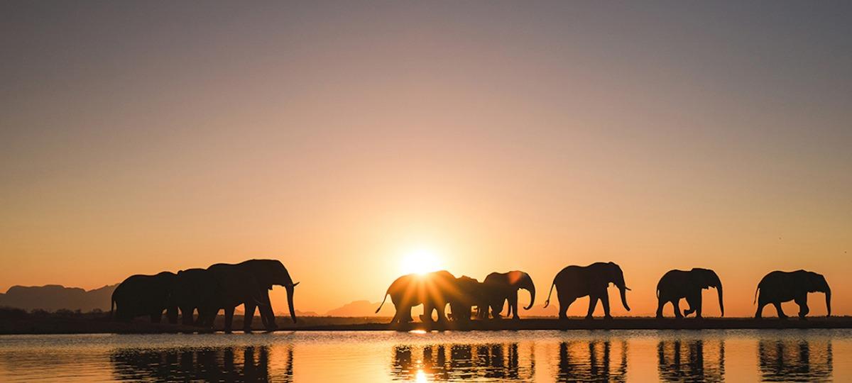 Erfahren Sie mehr vom weltberühmten Elephanten-Experten und Tierarzt Dr. Johan Marais über die sensiblen Dickhäuter