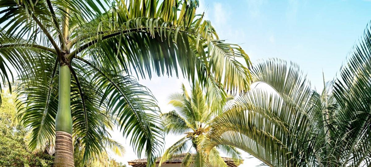 Herzlich Willkommen im Camp Bahia