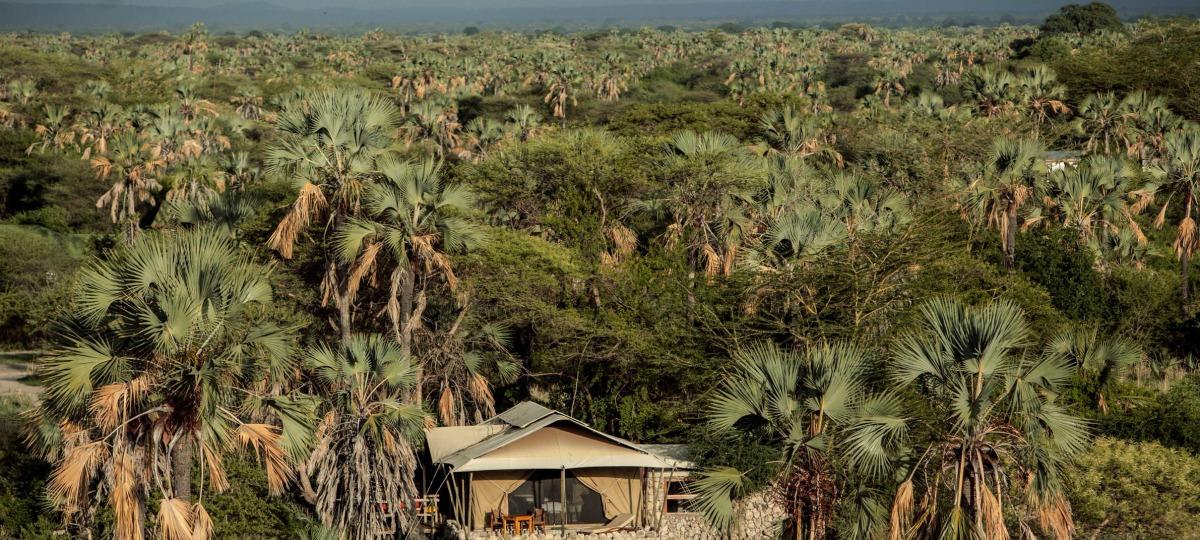 Eine Oase inmitten wunderschöner Palmen