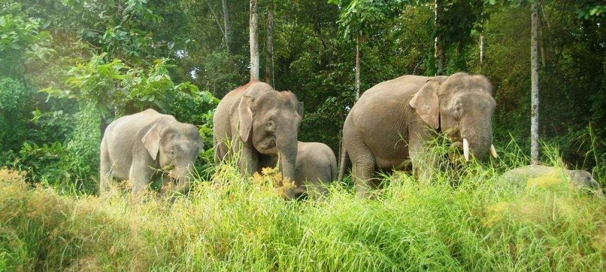 Herzlich Willkommen in der Rainforest Lodge