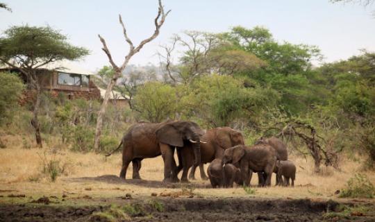 Elefanten vor der Lodge