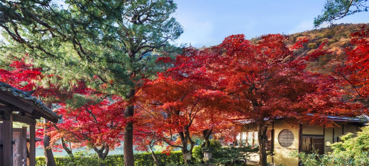 Herbstliche Farben auf dem Weg zum Cafe Hassui