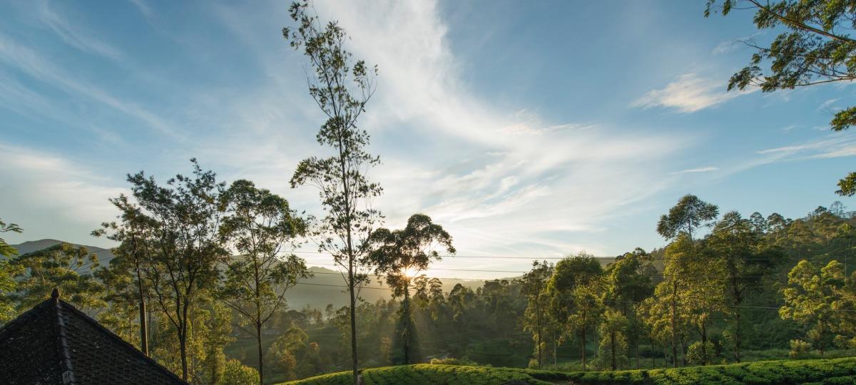 Willkommen in den Teeplantagen