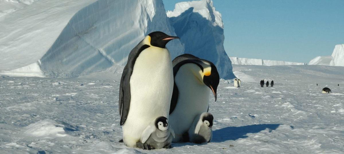 Die Ureinwohner Antarktikas