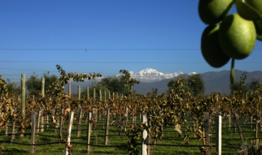 Weinanbau wird hier groß geschrieben