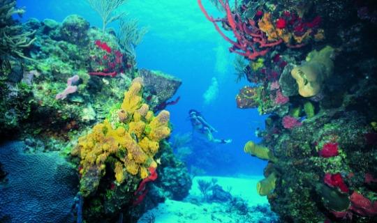 Erleben Sie die Unterwasserwelt hautnah
