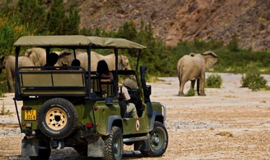 Spannende Safaris erwarten Sie