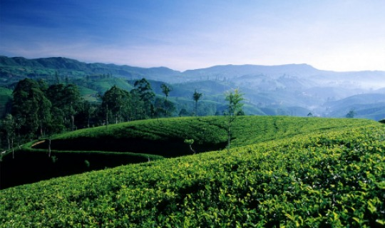 Sri Lankas üppige Natur