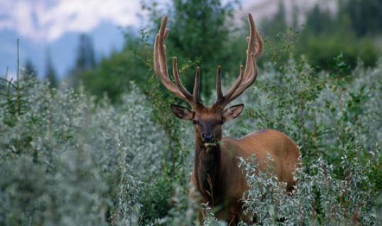 Auch er fühlt sich in Kanadas wildem Westen wohl