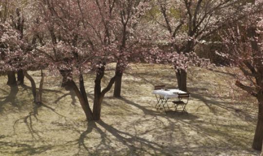 Romantisches Picknick in zauberhafter Location
